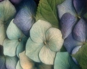 Hydrangea - Cross stitch pattern pdf format