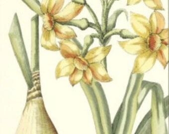 Daffodils - Cross stitch pattern pdf format