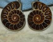 E00138 Two ammonite fossil pendant