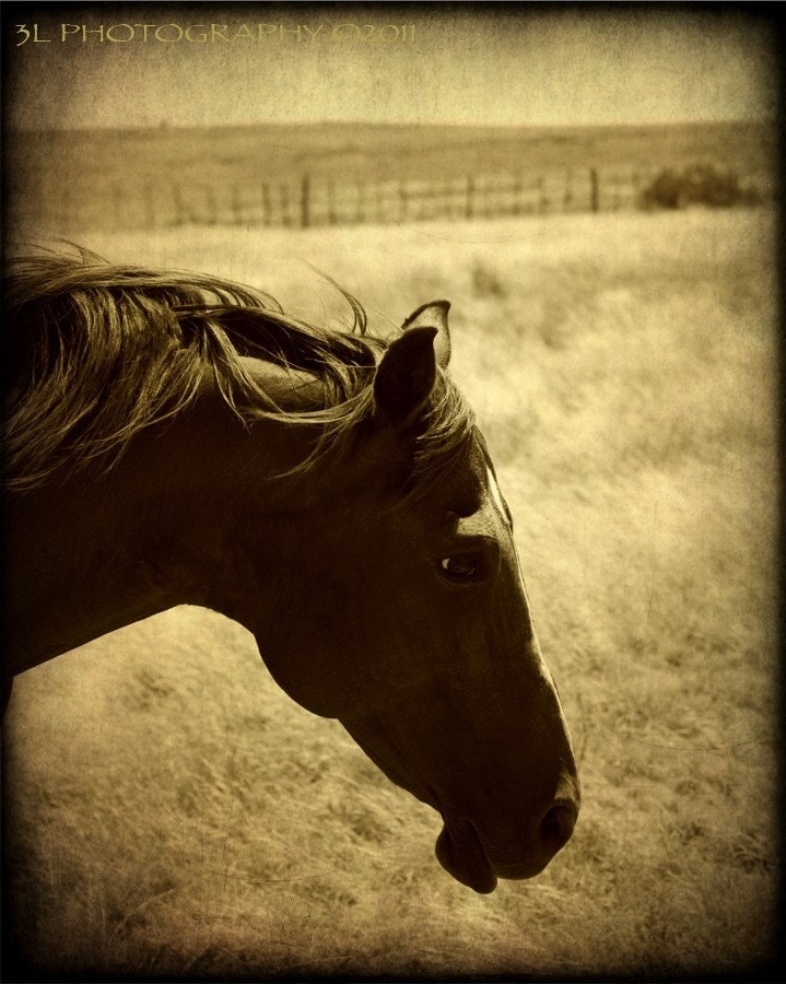 Horse PhotographyTexas Rustic Western Art by 3LPhotography on Etsy