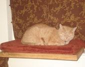 Taters Cat perch