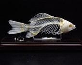 Real fish skeletons