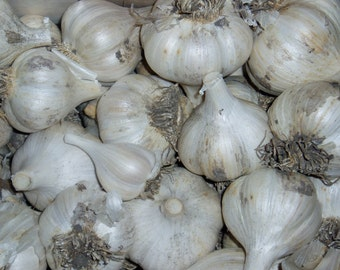 Garlic Bulbs, Romanian Red, 6 Bulbs-Large, Hot & Spicy, No Chemicals, 2017 Crop