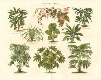 1893 Lady Palm, Rex Begonia Vine, Golden Polypody, Tropical Pandan Tree, Cast-iron Plant, Cabbage Palm, Chinese Fan Palm Antique Lithograph