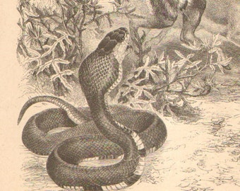 1866 Egyptian Cobra Original Antique Engraving to Frame