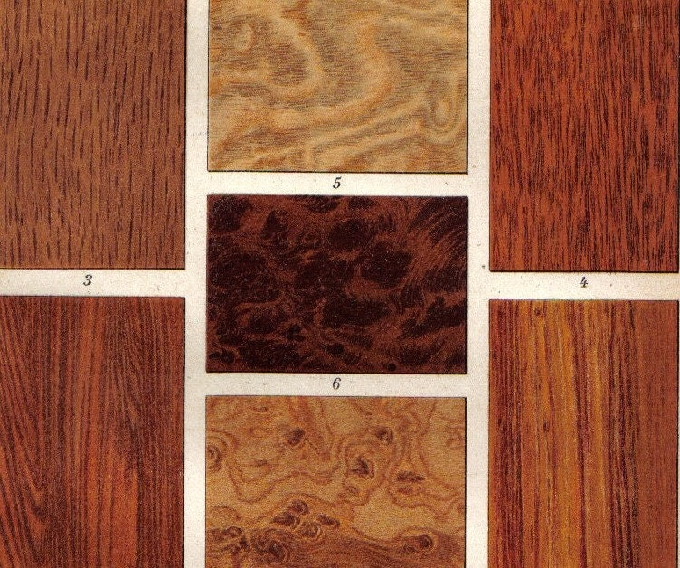 1903 Wood Types Oak Walnut Tree Ironwood By CabinetOfTreasures