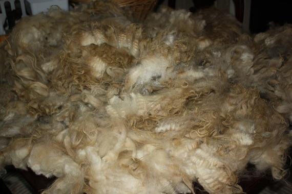 RAW Wool/ unwashed Icelandic fleece