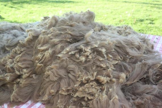 Raw Cria Alpaca Fiber