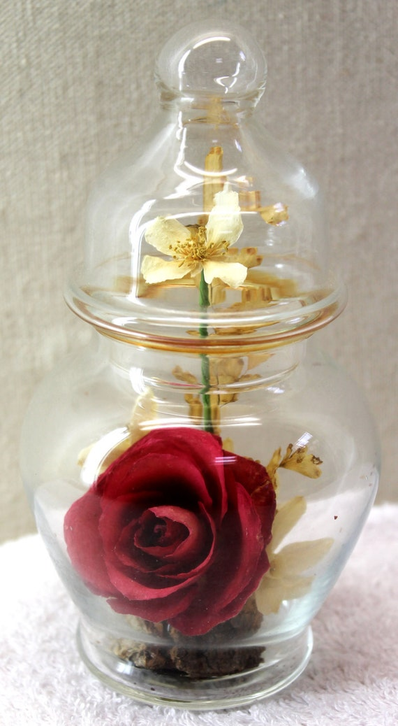 Preserved Rose and Blossoms in A Glass Bulb