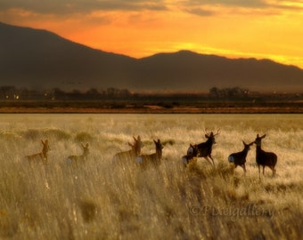 Playful Deer Running in Field at Sunrise, 8x12 Fine Art Print