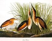 Audubon Birds of America Vintage 1979 Art Print Collectable Frameable Book PLATE 102 Least Bittern Beautiful Birds Print Art