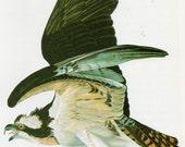 Audubon Birds of America Vintage 1979 Art Print Collectable Book PLATE 142 Osprey Beautiful Bird Lake Mountains Large Fish