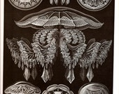 Ernst Haeckel JELLYFISH Art Print Vintage 1974 Book PLATE 87 88 Rhzostomeae Ocean Sea Jellyfishes and Seahorse Dragonfish Frogfish