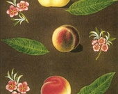 FRUIT PRINT PEACH 2002 Color Art Print Original Book Plate 87 Beautiful Yellow Peaches Pink Tree Flowers and Blooms and Green Leaves Nature