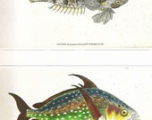 Vintage FISH PRINT Dragonet and Opah 1990 Art Original Book Plate 32 Beautiful Antique Fish Picture to Frame Wall Hanging Interior Design