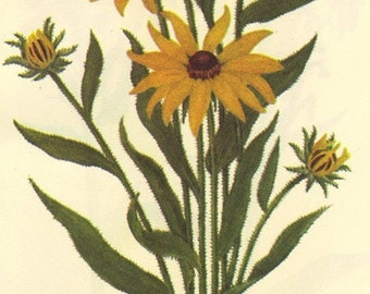 Vintage 1968 BLACK-EYED SUSAN Color Print Wild Flowers of America Frameable Book Plate 367 368 Black Eyed Susan and Cardinal Flower