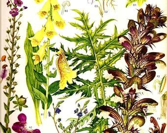 Vintage 1970 Art Print Wild Flowers Book PLATE 21 Purple Yellow Foxglove, Periwinkle, Large Flower Butterwort, Spiny Bear Breech Plants