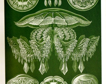 Ernst Haeckel JELLYFISH Colored 2010 Art Print Original Book Page Plate 87 88 Gorgeous Large Jellyfish Jellyfishes Fish Seahorse Shells Aqua