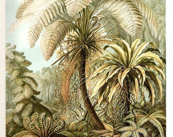Ernst Haeckel 2010 FERNS Colored Art Print Original Book Plate 91 92 Beautiful Palm Tree Ferns Antique Blue Ivory