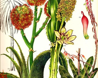 Vintage 1970 Color Art Print Wild Flowers Original Book PLATE 85 Cactus and Tropical Plants with Green Orange and Pink Flowers and Leaves
