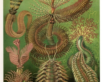 Ernst Haeckel Colored Art Print Original 2010 Book Page Plate 95 and 96 Ocean and Sea Creatures on Beautiful Deep Aqua