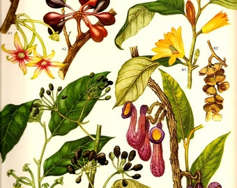 Vintage 1970 Color Art Print Wild Flowers Book PLATE 110a Beautiful Yellow FLower Berries and Plant Seeds and Purple Fly Trap Plant