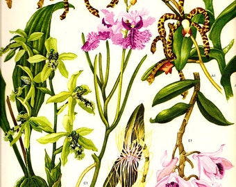 Vintage 1970 Color Art Print Wild Flowers Original Book PLATE 128 Beautiful Green Pink Spotted Scorpion Orchid Tropical Garden Plants Roots