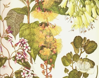 Vintage 1970 Color Art Print Wild Flowers Book PLATE 149 Beautiful Ehiyr Bell Flowers White Magnolia Yellow Fluffy Blush Pink Tree Branch