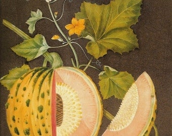 FRUIT PRINT MELON 2002 Color Art Print Original Book Plate 151 Beautiful Orange Melon Yellow Flowers and Vine Garden Fruit Plant with Seeds