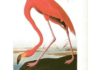 Audubon Bird Print Pink Flamingo Vintage 1979 Art Print Collectable Book PLATE 40 Flamingo to frame Wall Decor