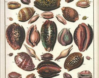 SHELLS CORALS Art Print Frameable Original Book Plate 30 Beautiful Shells French Hand-Colored Antique Writing Plates Ocean Marine Sea Life