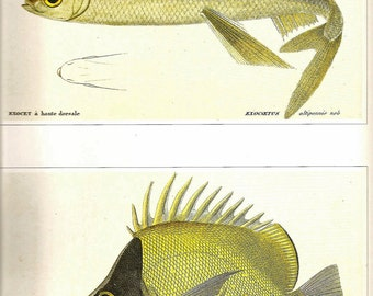 Vintage FISH PRINT Flying FIsh and Long Nosed Butterflyfish 1990 Art Original Book Plate 42 Beautiful Antique Picture to Frame Interior