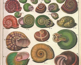 SNAIL SHELLS Print Art 2009 Book Plate 172 Beautiful Antique French Colored Snails Shells Engraved Ocean Marine Sea Life Nature