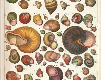 Land SNAILS SHELLS Print Art 2009 Book Plate 174 Beautiful Antique French Colored Snails Shells Engraved Ocean Marine Sea Life Nature