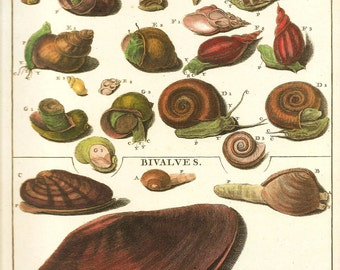 SEA SHELLS SNAIL Print Art 2009 Book Plate 196 Beautiful Antique French Freshwater Snails and Shells Marine NatureSea Life
