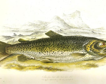 Vintage FISH PRINT Brown Trout 1990 Art Print Original Book Plate 70 Beautiful Antique Picture to Frame Wall Decoration Home Decor