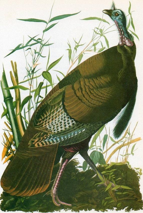 Audubon TURKEY Birds of America Vintage 1979 Art Print Collectable Frameable Book PLATE 118 Wild Turkey
