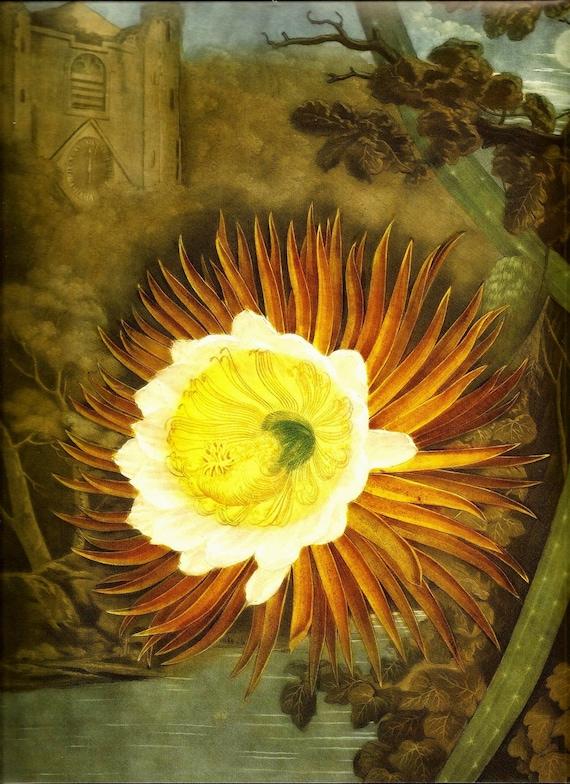 BOTANICAL FLOWER PRINT Botanicals Doublesided Art Original Book Plate 247 Tropical Flower Night Castle Lake White Yellow Lotus Lilly
