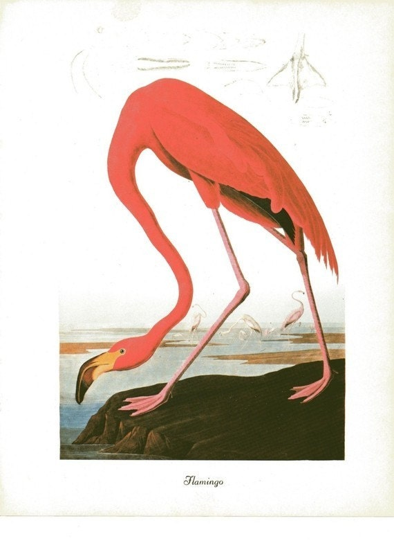 Audubon Bird Print Pink Flamingo Vintage 1979 Art Print