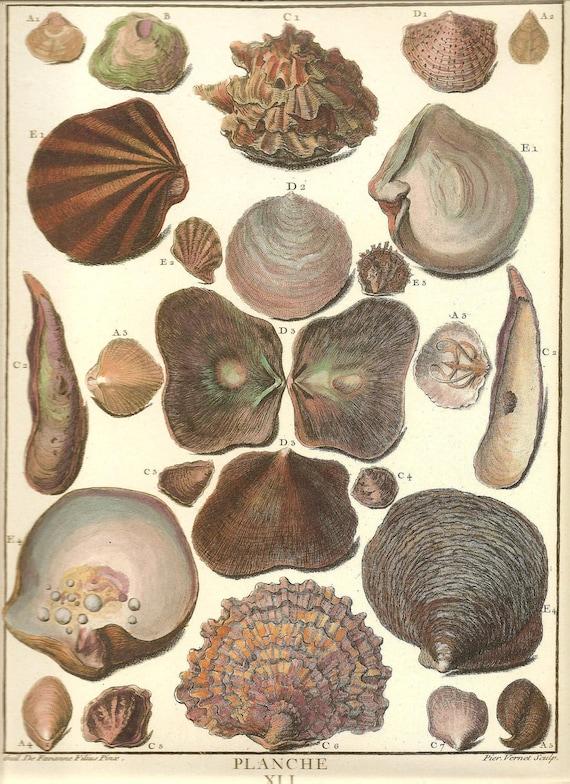 SHELLS Print Frameable Art Original Book Plate 41 Beautiful Shell French Splendid Hand-Colored Antique Engraved Ocean Marine Sea Life