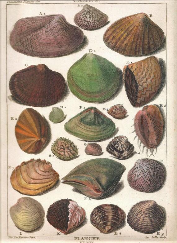 Antique Sea SHELLS Print Art Original 2009 Book Plate 140 Beautiful French Seashell Hand-Colored Antique Engraved Ocean Marine Sea Life