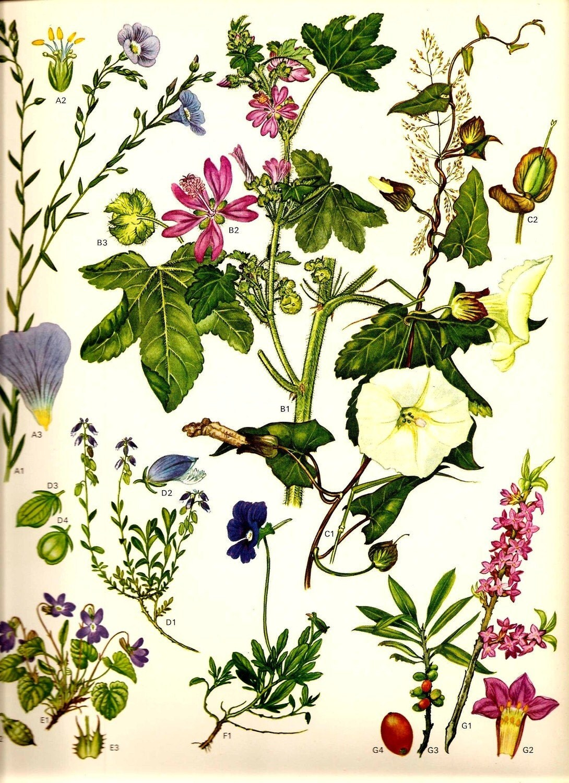 Vintage Flowers 1970 Botanical Art Print Wild Original Book