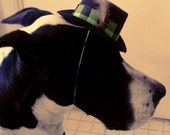 The Daper Dog Top Hat with Feather for Great Danes in Green