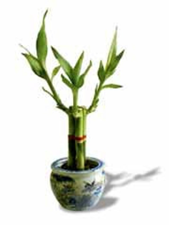 Artificial Bamboo Stalks ~ Lucky bamboo stalks