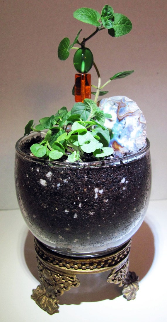 Mother Of Pearl Kitchen Herb Terrarium By Bizzybetty On Etsy