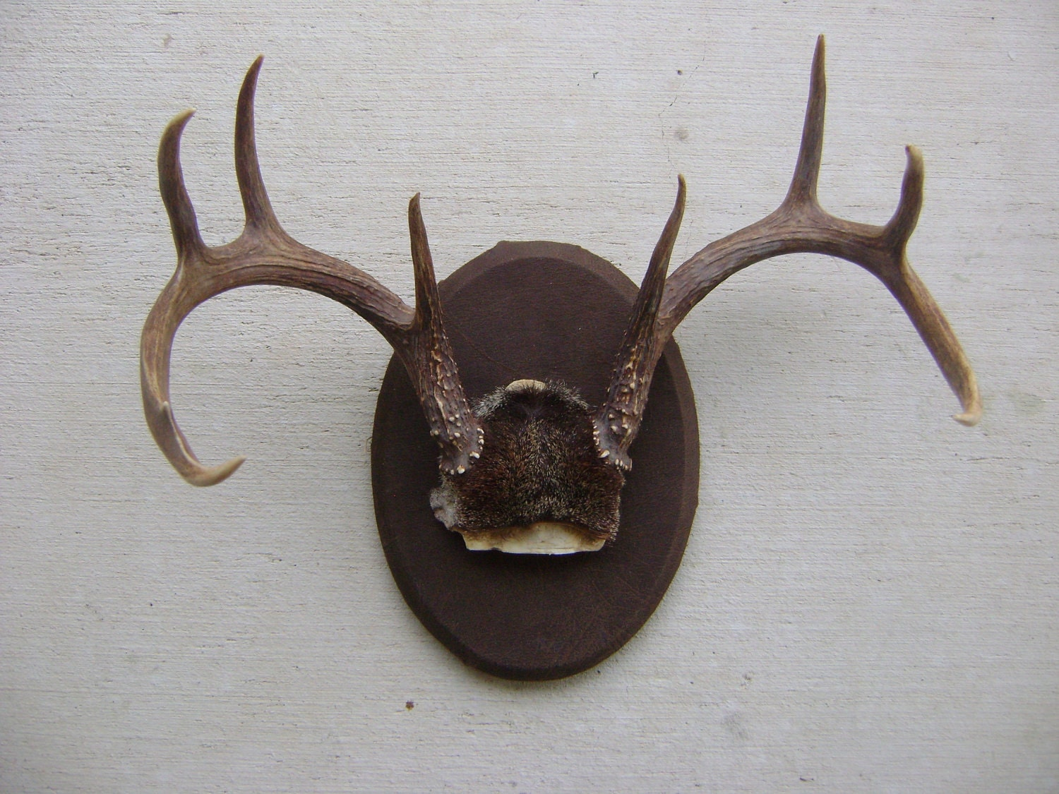 Deer Mount Wall Decor : Woodland deer antlers rustic wall decor man cave holiday