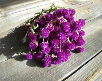 Bunch of Purple Gomphrena or Globe Amaranth