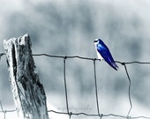 ON The FENCE - 8x10 print