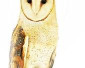 barn owl portrait - night time raptor bird - 8x10 fine art photograph print