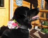 Sale  Sale  Sale   Collar Accent PINK flowers